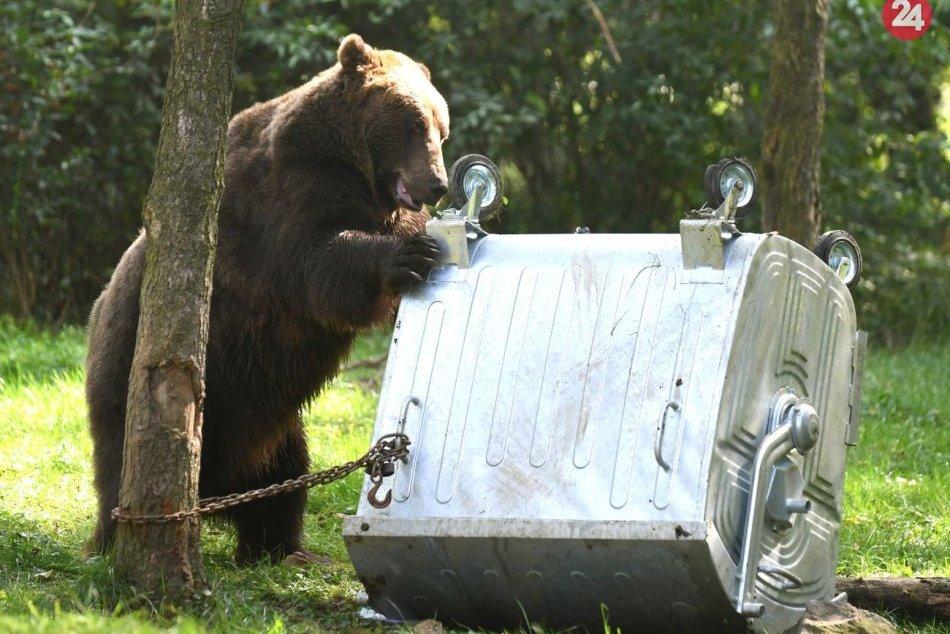 Situácia s medveďmi sa zhoršuje